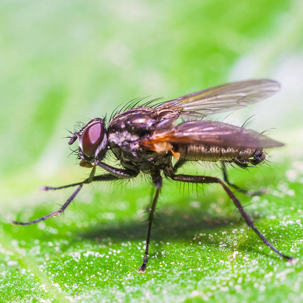 Essential Oils to Repel Pesky Insects